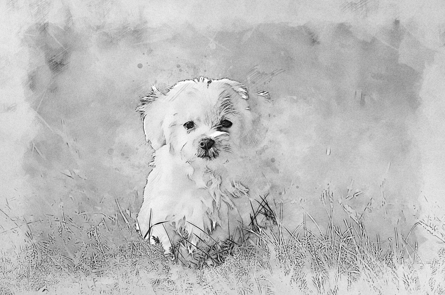 dog-1123016_quick-sketch_181127_1500x996_a